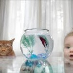 cat-and-fish-small-150x150